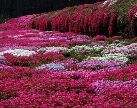Flowers,flowers,flowers