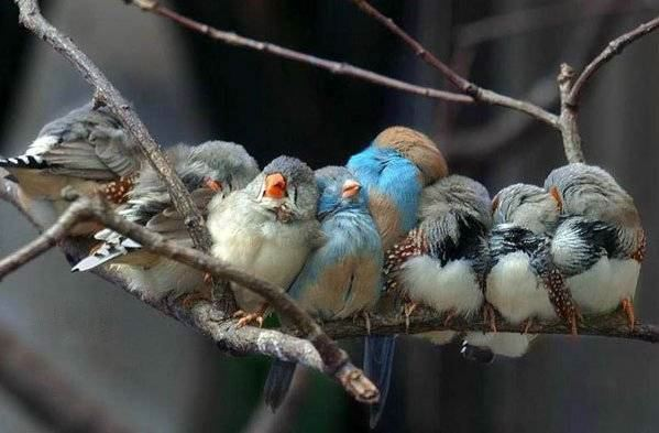 sleepy birds