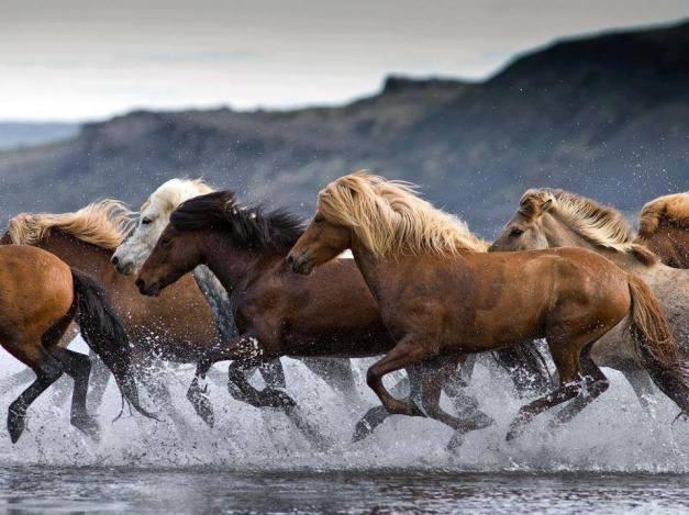 RUNNING HORSES2